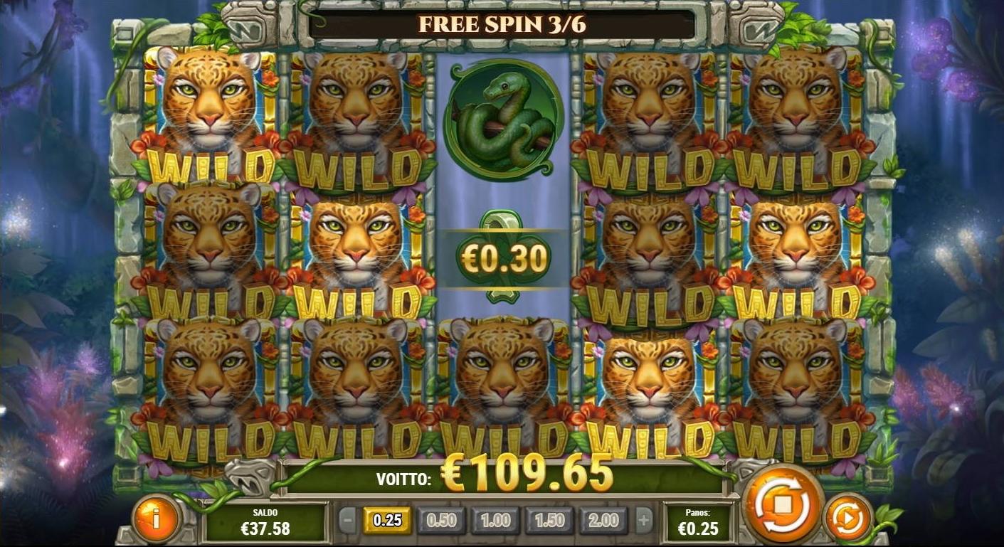 rainforest magic big win